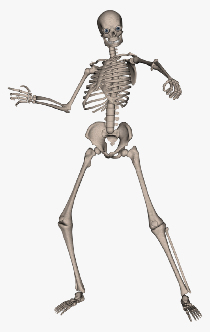 Skeleton, Skull Png Image - Skeleton Png, Transparent Png, Free Download