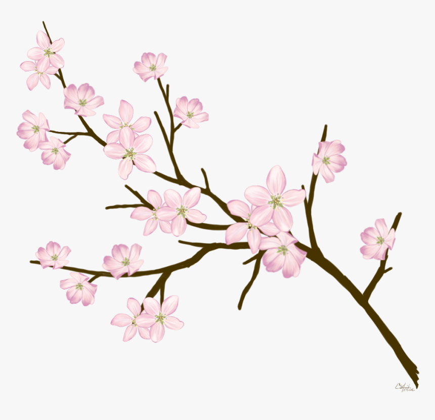 Cherryblossom Flowers Branches Freetoedit - Blossom Cherry Branches, HD Png Download, Free Download