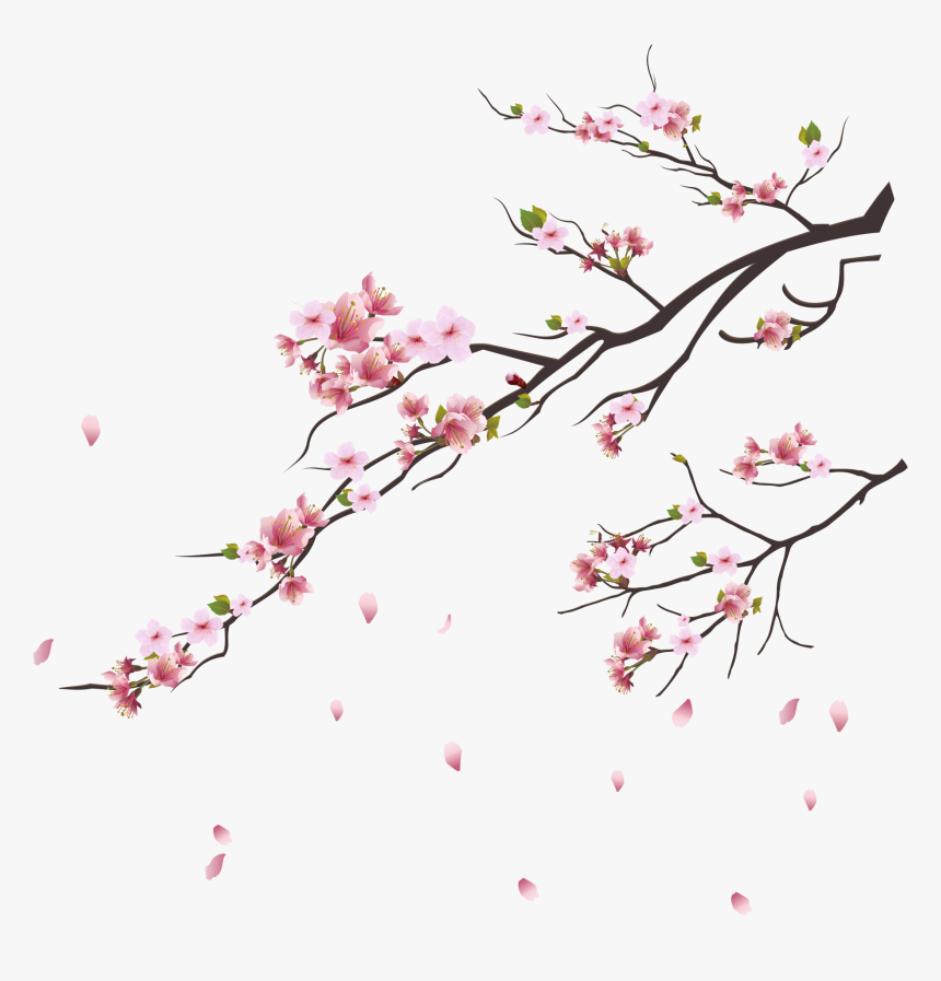 Blossom Trees, Cherry Blossom Tree, Pink Flowers, Botanical - Cherry Blossom Tree Png, Transparent Png, Free Download