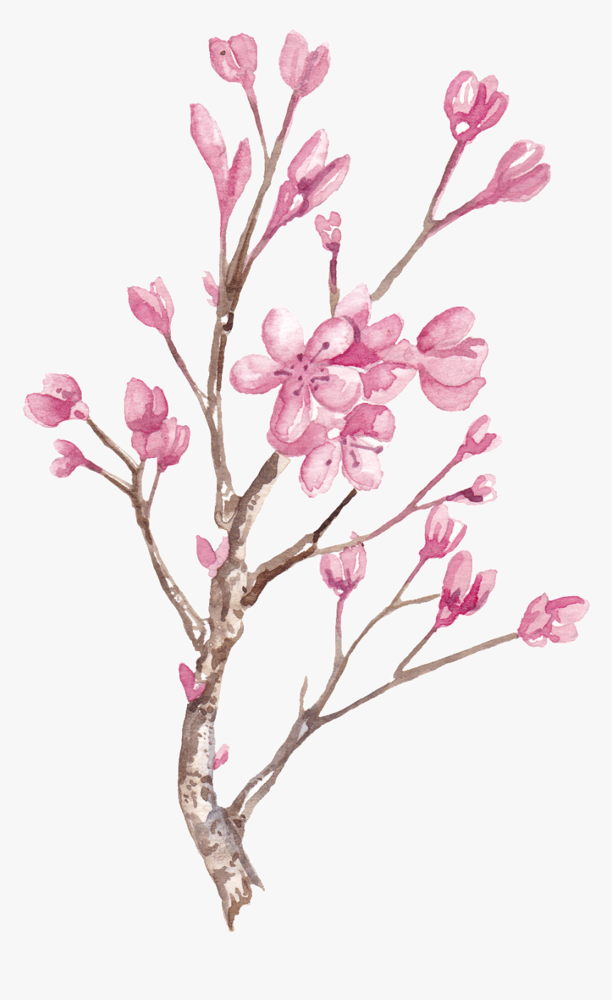 Hand Painted Winter Plum Blossom Branch Png Transparent - Painting Winter Plum Blossom, Png Download, Free Download