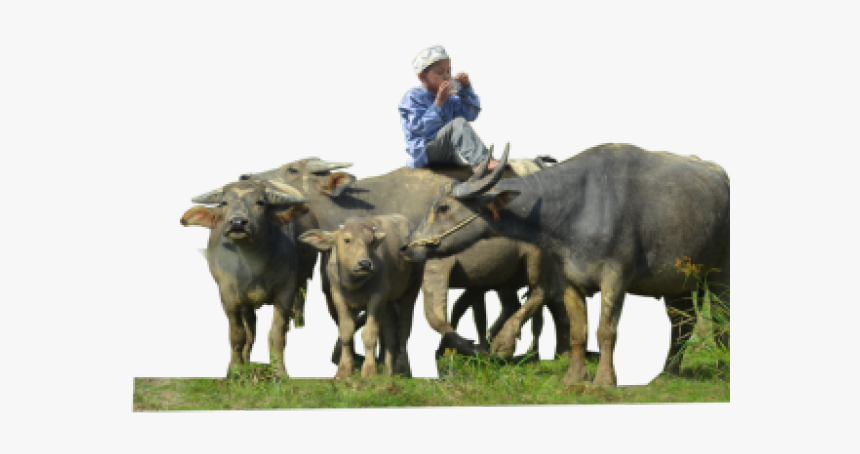 Buffalo Png Transparent Images - Indian Buffalo Hd Png, Png Download, Free Download
