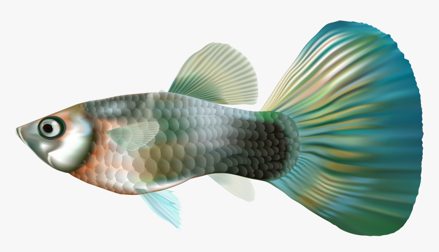 Fish Clipart Underwater - Transparent Guppy Fish Png, Png Download, Free Download