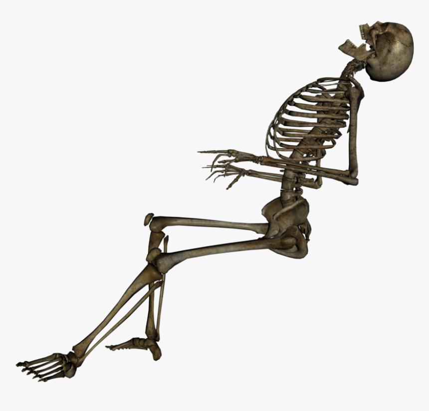 Skeleton Png Background Image - Dead Skeleton Png, Transparent Png, Free Download