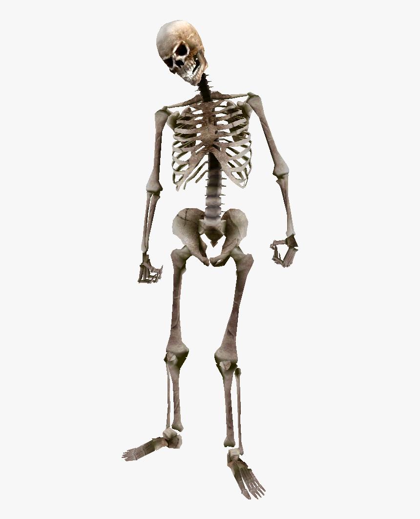 Skeleton Png, Transparent Png, Free Download