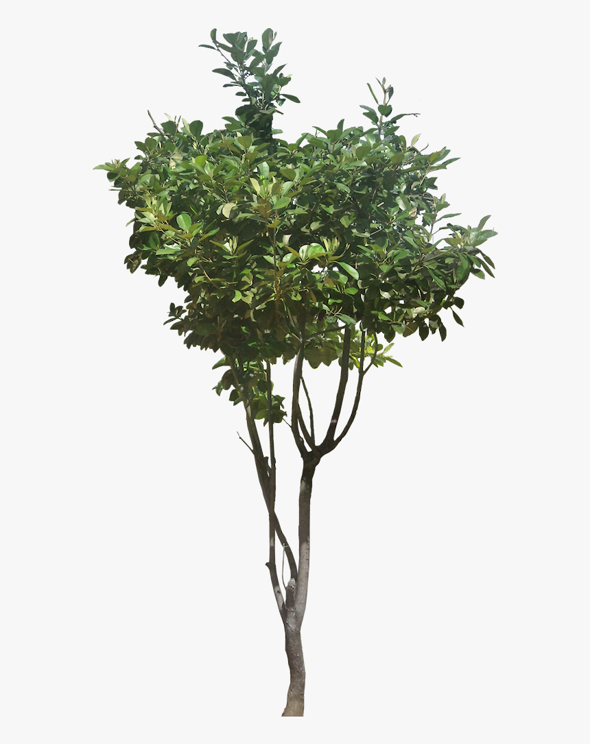 Ficusp02-l - Faux Boxwood Topiary, HD Png Download, Free Download