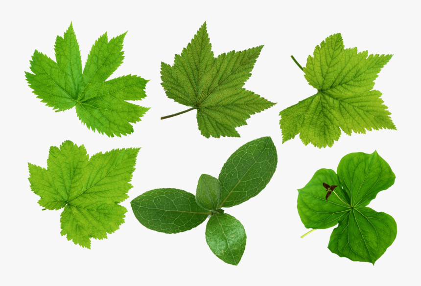 Green-leaves - Leaves Cut Out Png, Transparent Png, Free Download