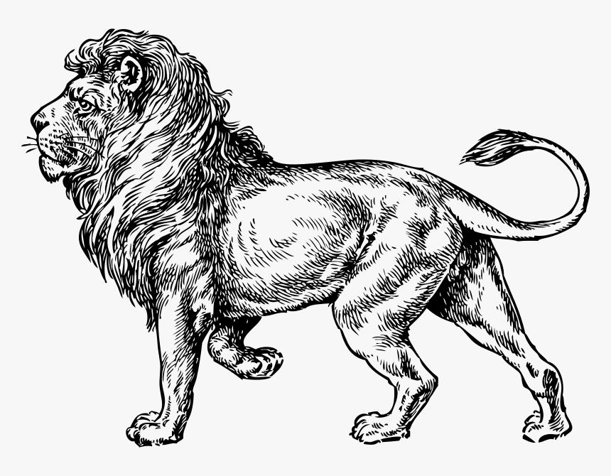 Lion - Lion Clip Art, HD Png Download, Free Download