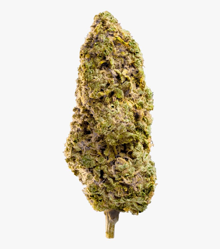 Fast Master Bud Marijuana - Fast Master Strain, HD Png Download, Free Download