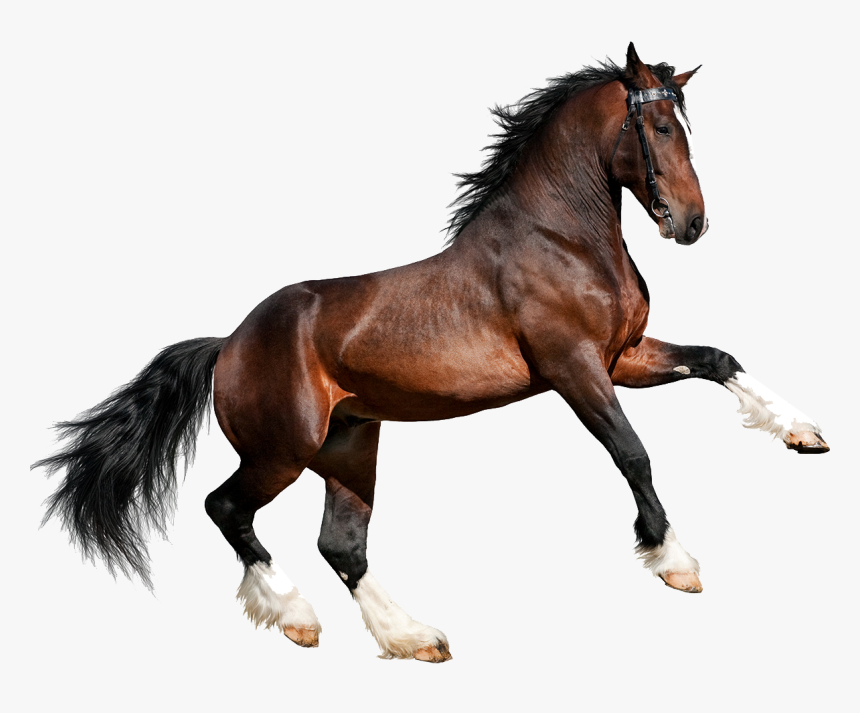 Caballo Png Page - 4 Pics 1 Word Level 2053, Transparent Png, Free Download