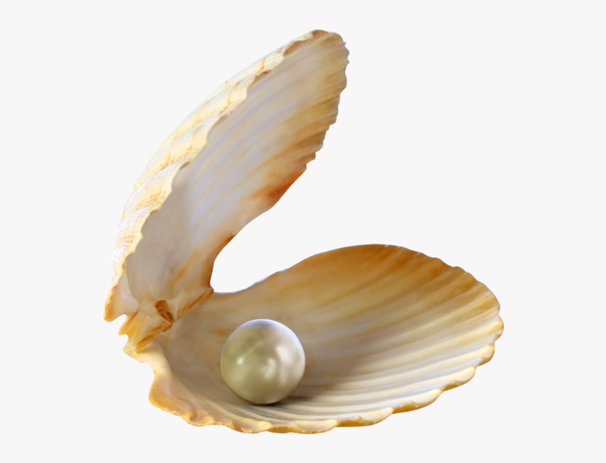 Thumb Image - Seashell With Pearl Png, Transparent Png, Free Download