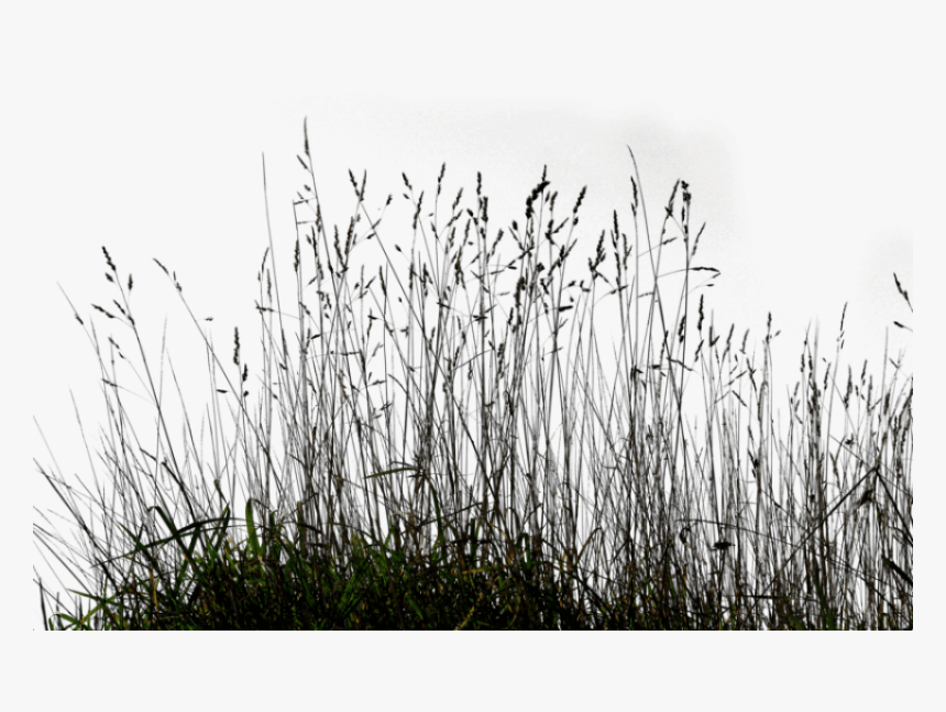 free png download long grass png images background transparent black grass png png download kindpng free png download long grass png images