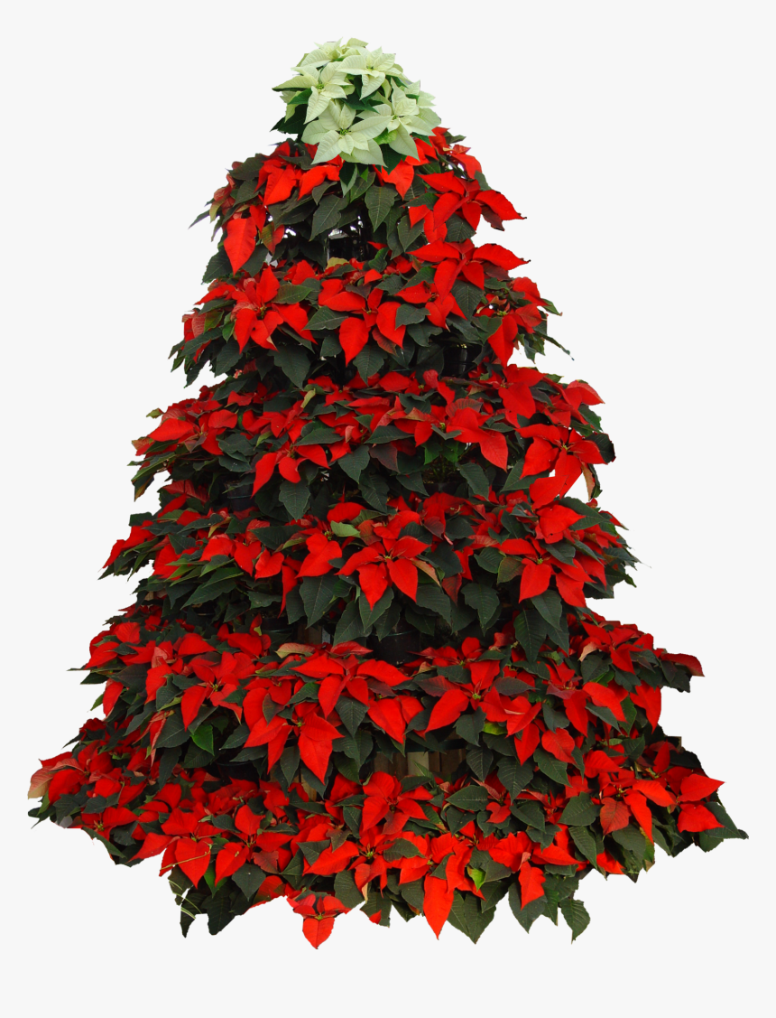 Poinsetta Clip Christmas Tree - Christmas Tree Poinsettia Clipart, HD Png Download, Free Download