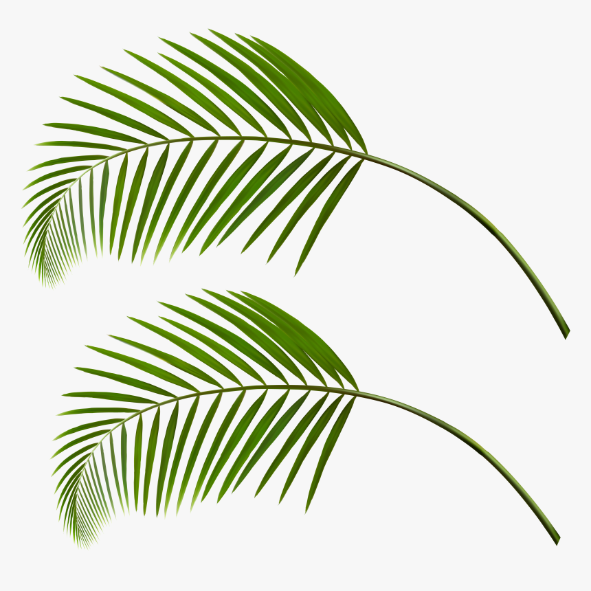 Transparent Fall Leaf Clipart - Palm Tree Leaves Falling, HD Png Download, Free Download