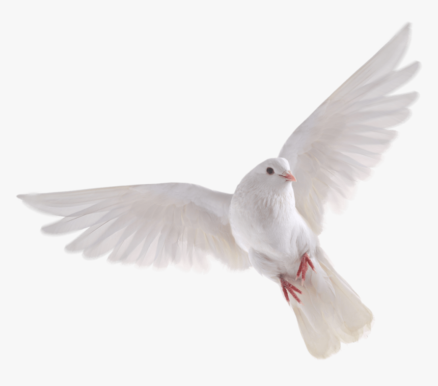 Doves Flying Png - Transparent Background White Doves, Png Download, Free Download