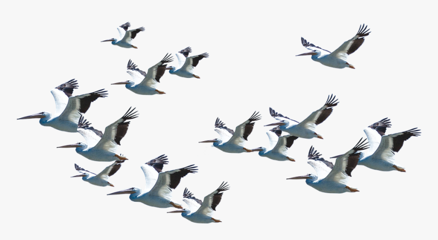 Bird Migration Good Morning Believe Quotes Hd Png Download Kindpng