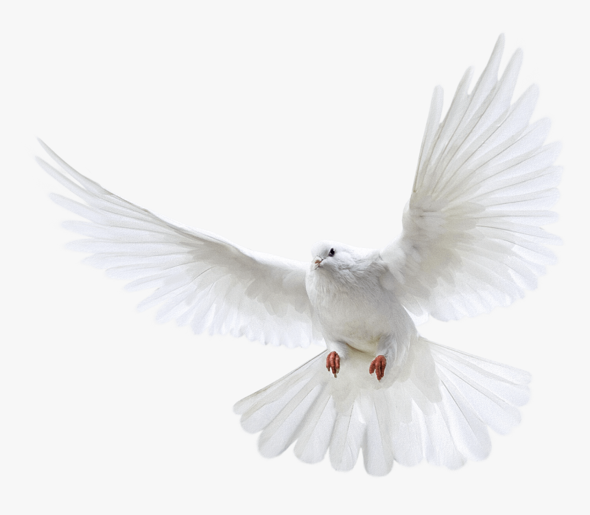 Clip Art For Free Download - White Flying Dove Png, Transparent Png, Free Download