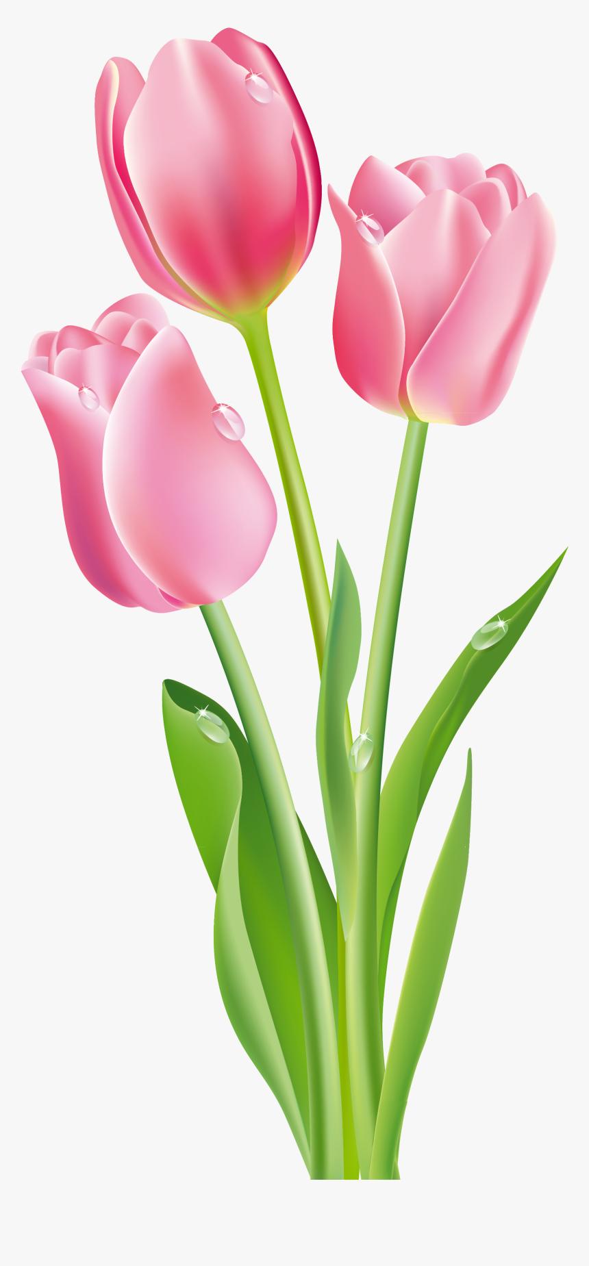 Tulip Flower Clipart Png, Transparent Png - kindpng (860 x 1849 Pixel)
