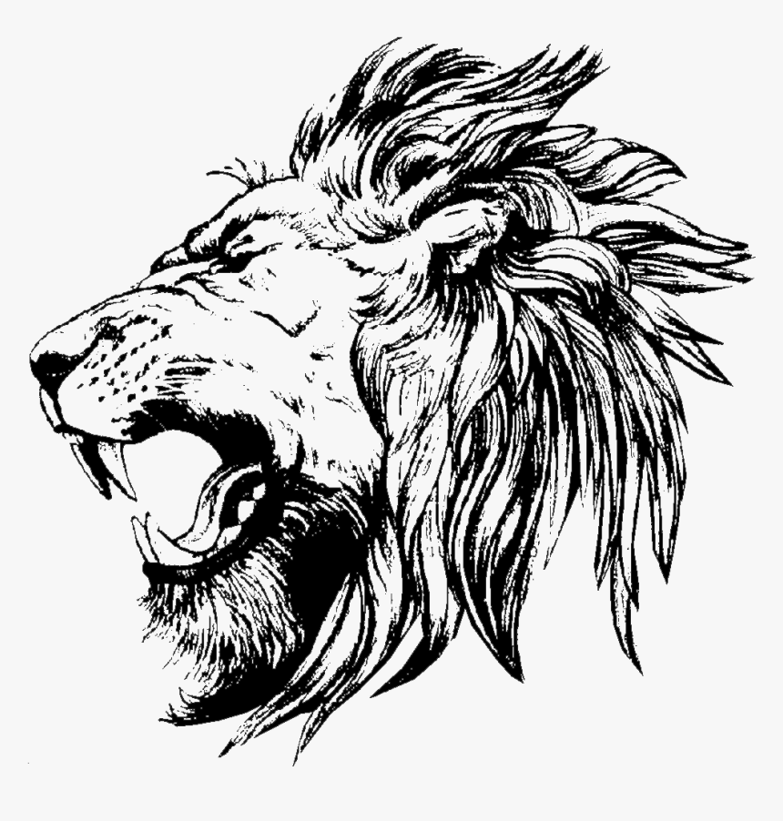 Lion Drawing Lion Face Side View Drawing Hd Png Download Kindpng Are you look up for the sketch? lion face side view drawing hd png