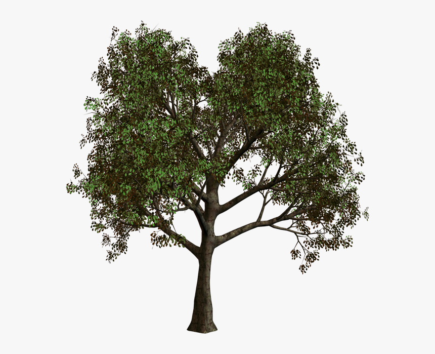 Png Gallery Yopriceville High - Forest Tree Transparent Background, Png Download, Free Download