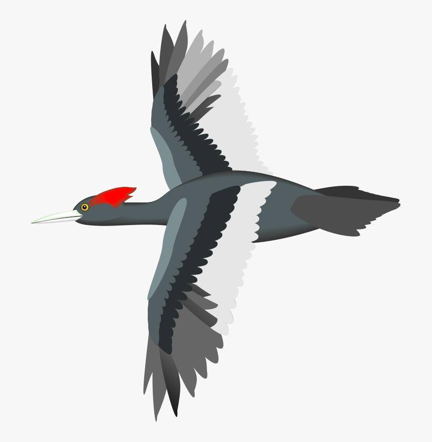 Bird Flight Sparrow Parrot Goose - Vector Bird Flying Png, Transparent Png, Free Download
