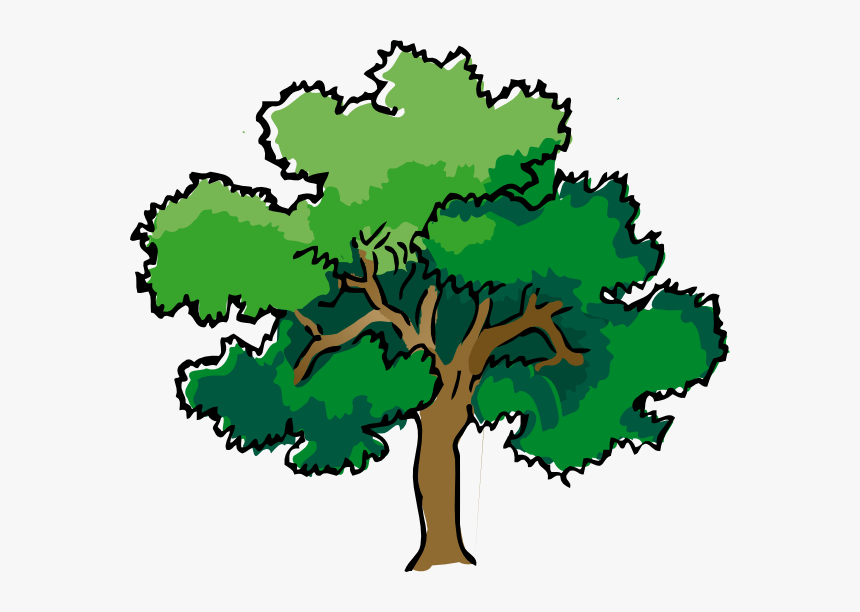 Oak Clipart Deciduous Tree - Tree Drawing With Color, HD Png Download, Free Download