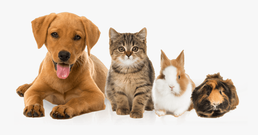 Pets Dog And Cat And Rabbit Transparent Images Of Pets Hd Png Download Kindpng