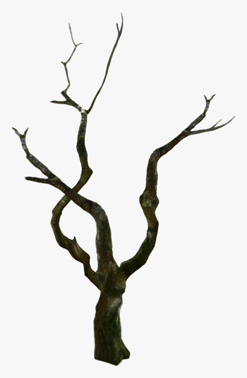 #treetrunk #tree #oldtree #spooky - Wood, HD Png Download, Free Download