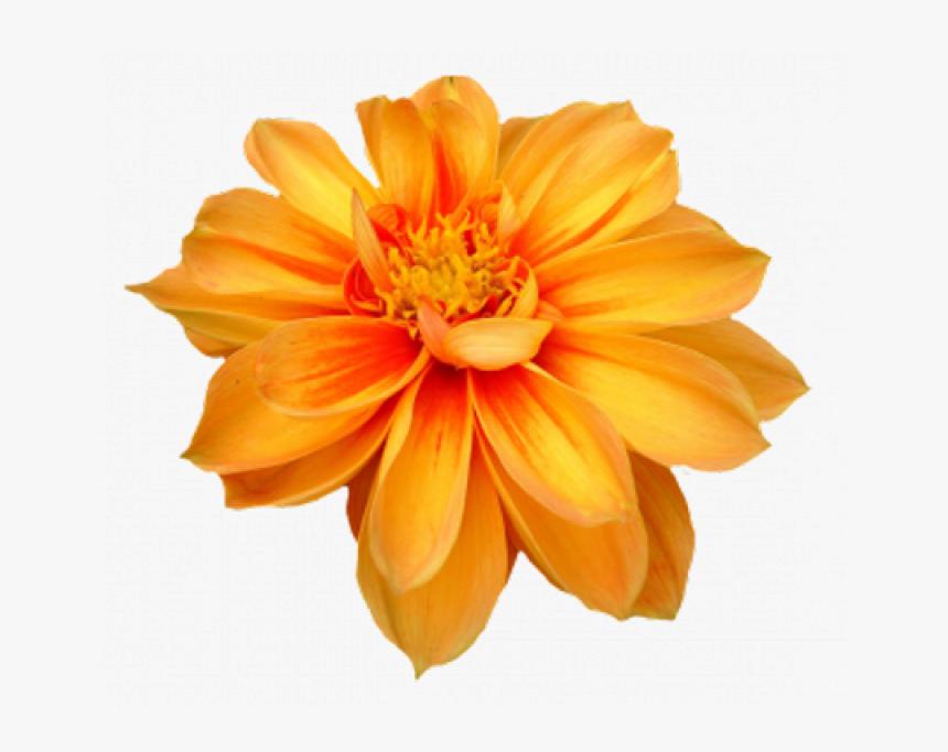 Flower Png Image - Marigold Flower Transparent Background, Png Download, Free Download