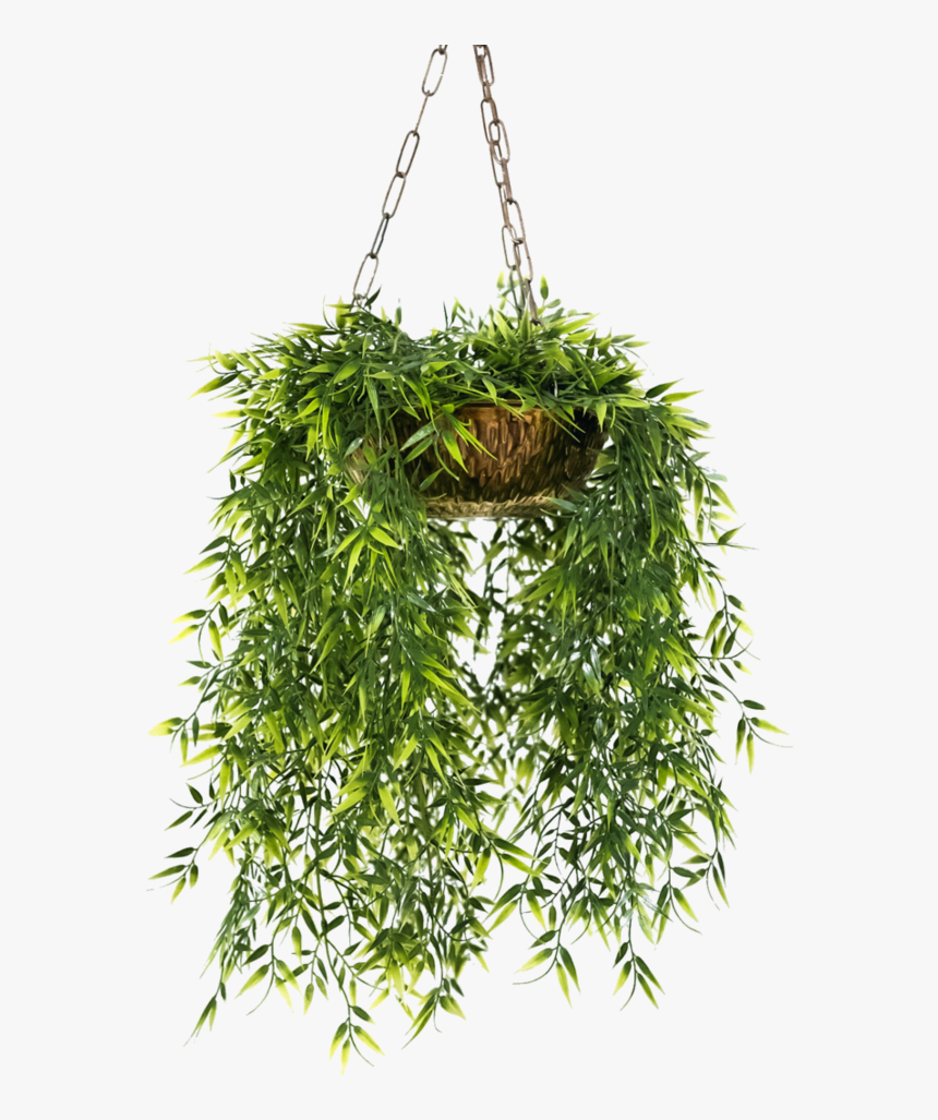 Hanging Potted Plant Png