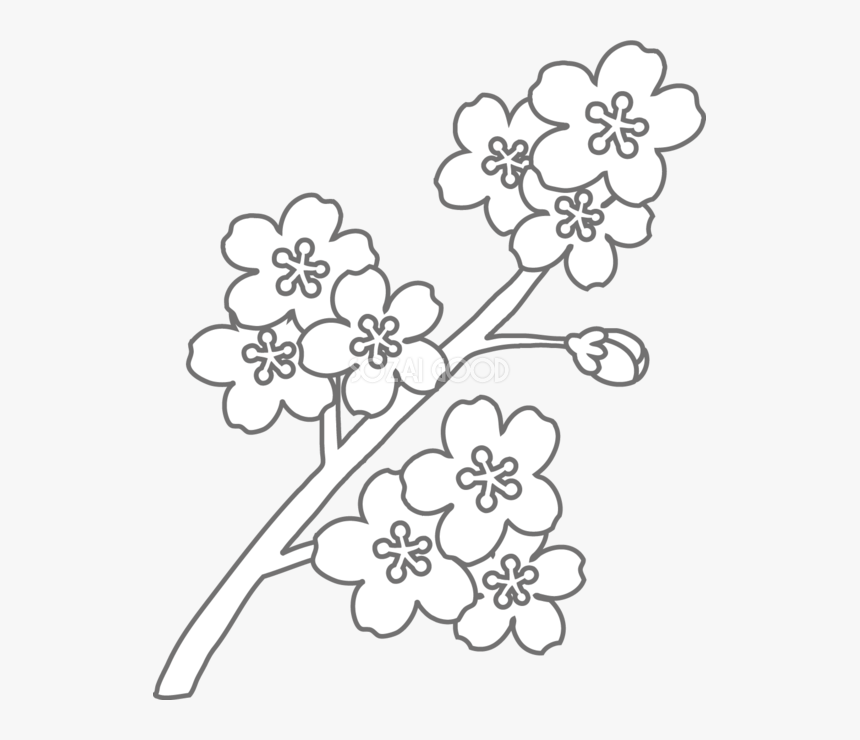 Coloring Book Floral Design Black And White - 塗り絵 簡単 高齢 者, HD Png Download, Free Download