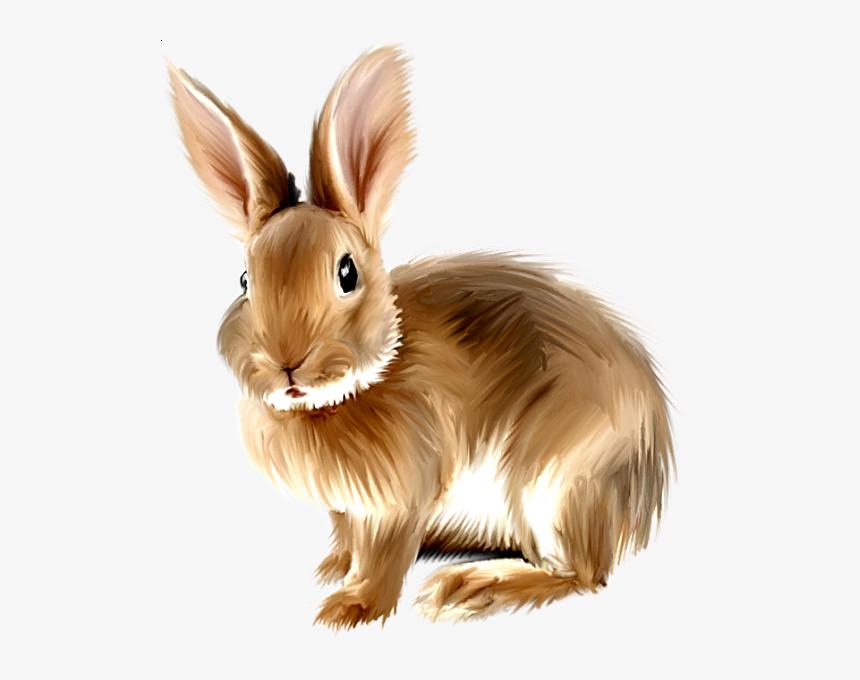 Rabbit Png, Bunny Rabbit, Rabbit Clipart, Baby Bunnies, - Rabbit Clipart Png, Transparent Png, Free Download