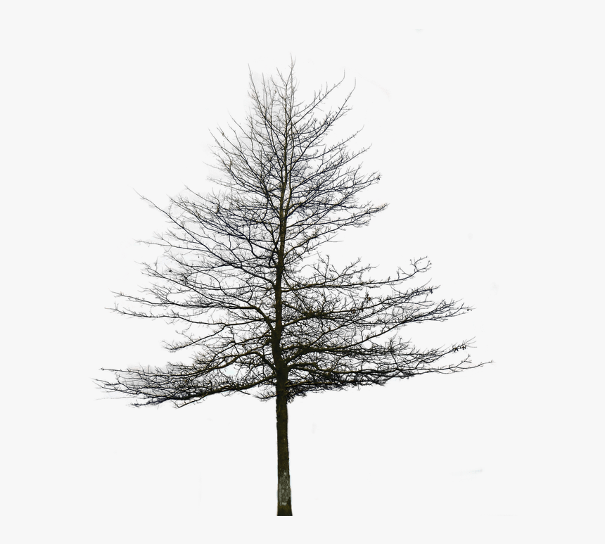 Transparent Snowy Tree Png - Snow On Christmas Trees , Free Transparent  Clipart - ClipartKey