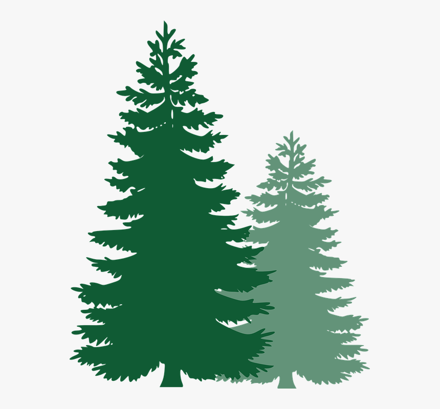 Pine Trees, Spruce Trees, Evergreen Trees, Tree, Spruce - Vector Pine Tree Png, Transparent Png, Free Download