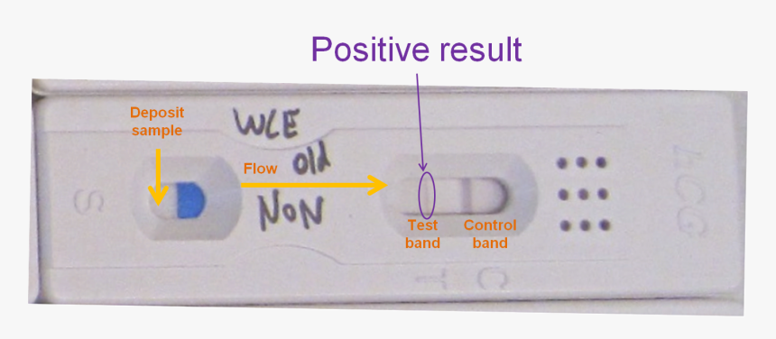 Pregnancy Tests Folding Solution Hcg Test Results Positive Hd