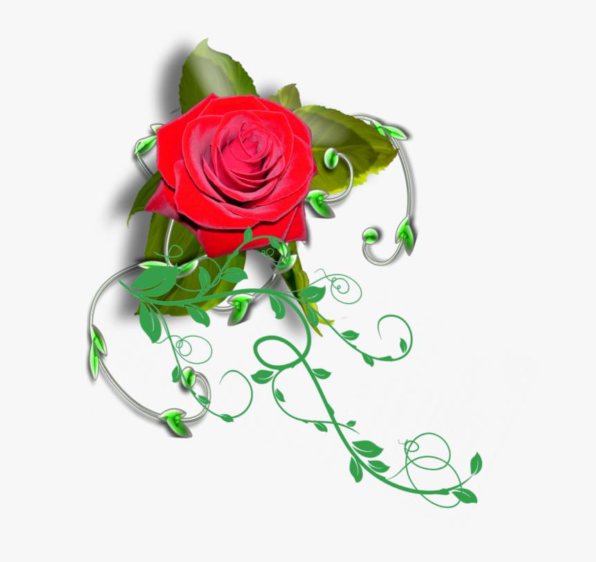 Transparent Rose Vines Png - Transparent Rose Vines, Png Download, Free Download