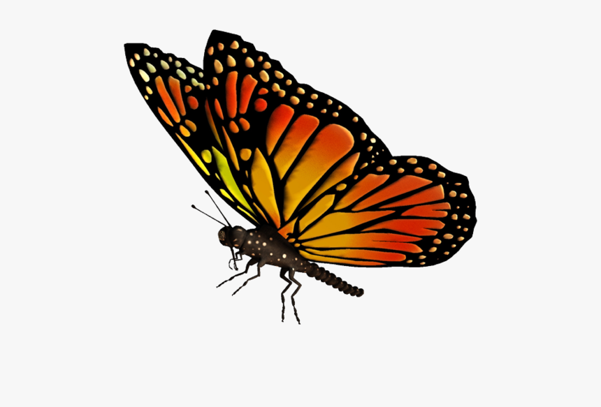Flying Butterflies Transparent Png - Transparent Background Butterfly Gif Png, Png Download, Free Download