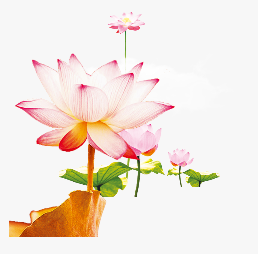 This Graphics Is Wen Hao Fresh Hand Painted Lotus Flower - Nymphaea Nelumbo, HD Png Download, Free Download