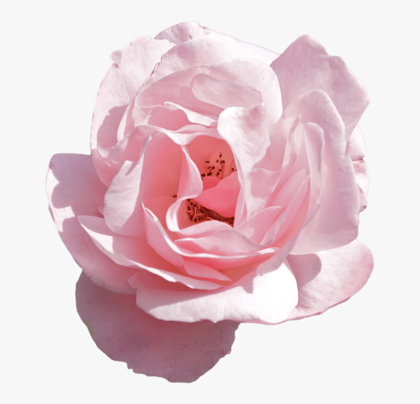 Crown Png Tumblr Pink - Transparent Aesthetic Flower Png, Png Download, Free Download