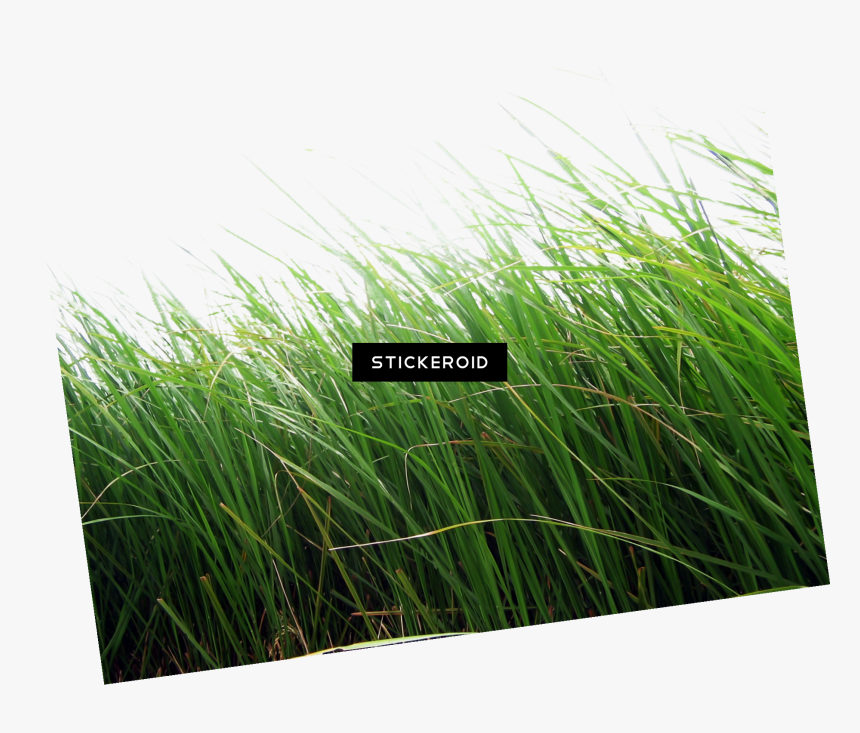 Editing Grass Background Hd, HD Png Download, Free Download