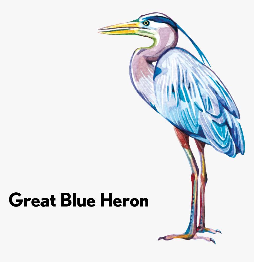 Transparent Blue Heron Png - Ciconiiformes, Png Download, Free Download