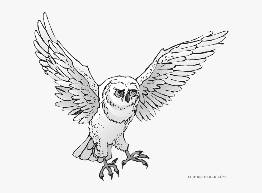 Transparent Owl Clip Art - Snowy Owl, HD Png Download, Free Download