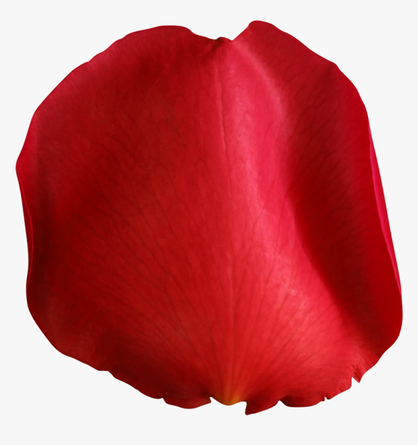 Pin By On Pinterest - Flower Petal Png Transparent, Png Download, Free Download