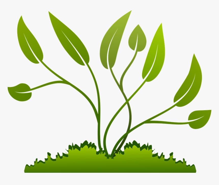 Clip Art Nature Plants