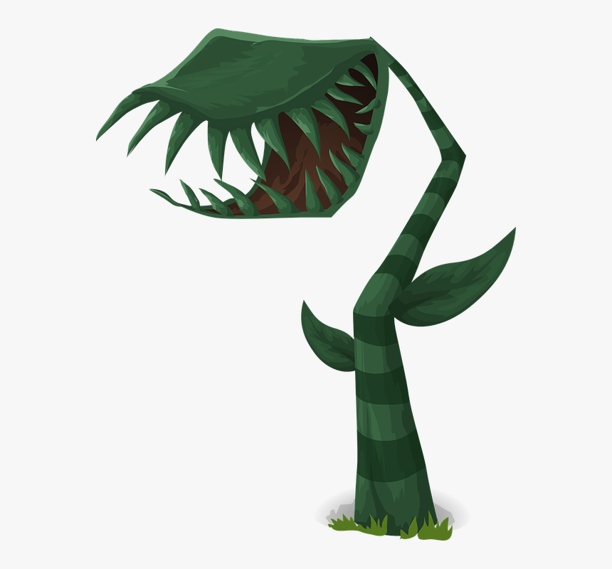 Carnivorous, Plants, Green, Leaves, Leafy, Growing - Carnivorous Plants For Kids, HD Png Download, Free Download