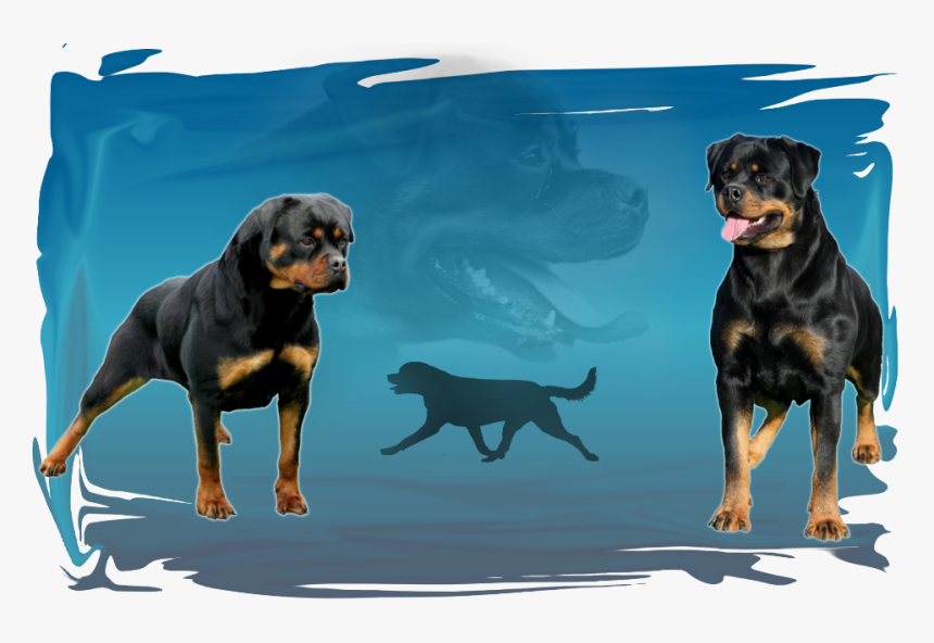 Rottweiler, HD Png Download, Free Download