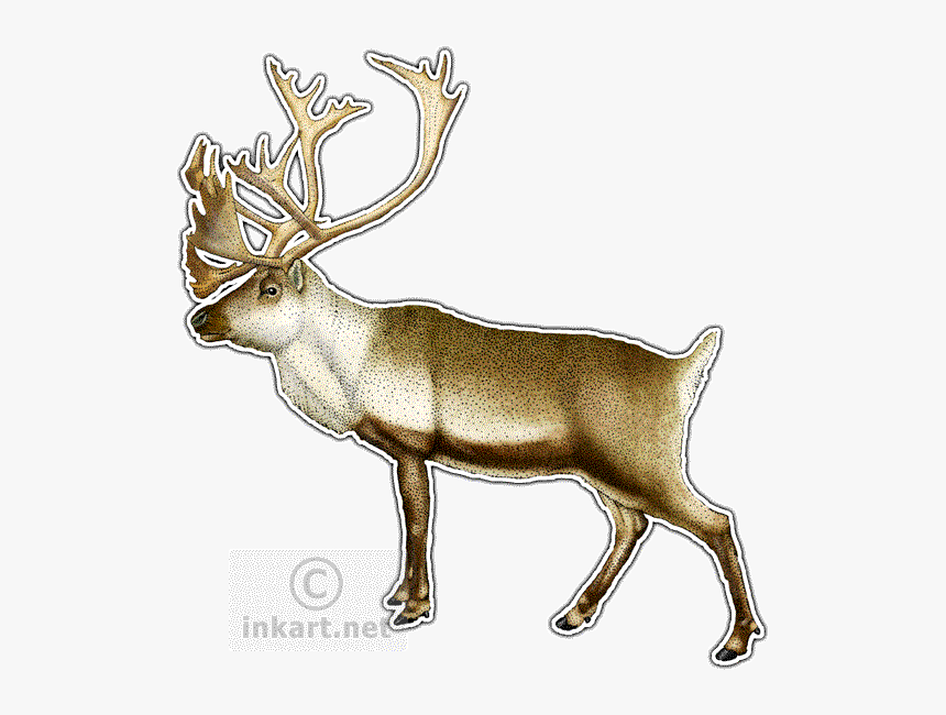 Elk Clipart Caribou - Drawing, HD Png Download, Free Download