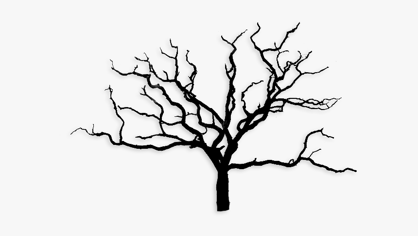 Arbre Sans Feuille Png, Transparent Png, Free Download