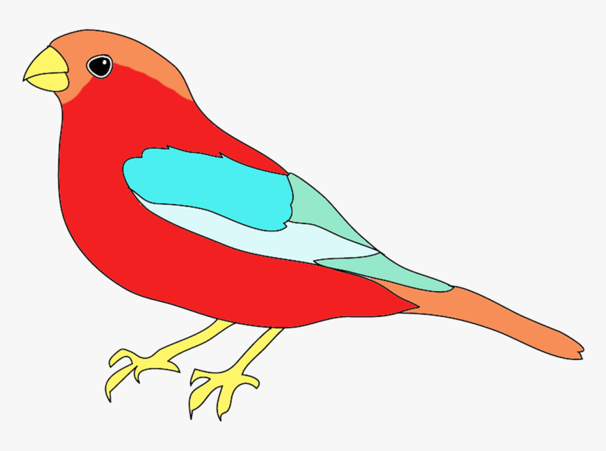 Bird In Many Colors - Birds Image For Colour, HD Png Download, Free Download