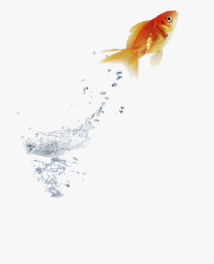 #goldfish #jumping #water - Stock Photography, HD Png Download, Free Download