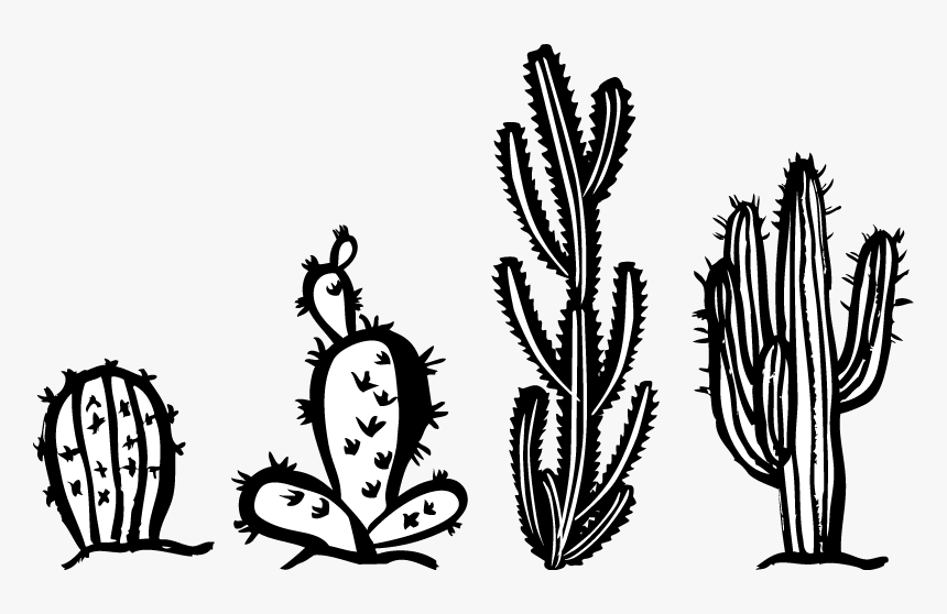 Cactus Bianco E Nero, HD Png Download, Free Download